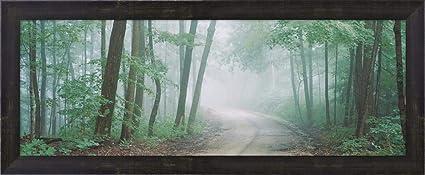 Amazon com: Skyline Drive, Jackson-Washington State Forest, Indiana
