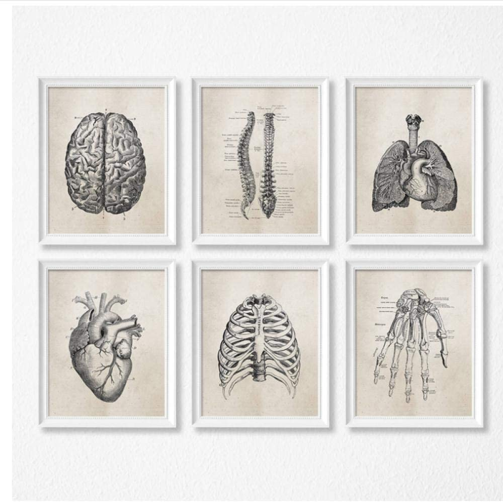 MULMF Anatomía Humana Ciencia Carteles Antiguos Láminas Artísticas Anatomía Médica Pintura Sobre Lienzo Clínica Médica Imágenes De Pared Decoración- 50X70Cmx6 Sin Marco