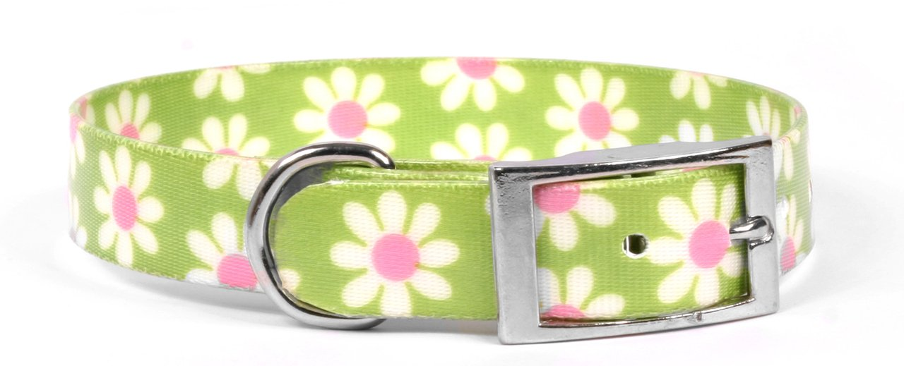 Yellow Dog Design Green Daisy Elements Dog Collar Fits Neck 10.5 to 13'', Small/3/4 Wide
