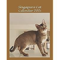 Singapura Cat Calendar 2021