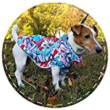 Pattern dog raincoat with hood for small and large dogs, Waterproof & windproof dog coat, Custom made stylish dog rain coat by DoggyBanda
