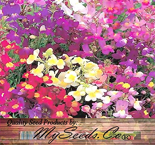 2 BIG PACK - 2 Packs x (406,000) FAIRY BOUQUET Dwarf Mix & NORTHERN LIGHTS Tall Mix BABY SNAPDRAGON Seeds - Linaria maroccana - Flower Seeds By MySeeds.Co (BIG PACK - Nothern Lights & Fairy Bouquet)