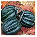 David's Garden Seeds Squash Winter Tuffy Acorn SL3621 (Green) 50 Organic Seeds