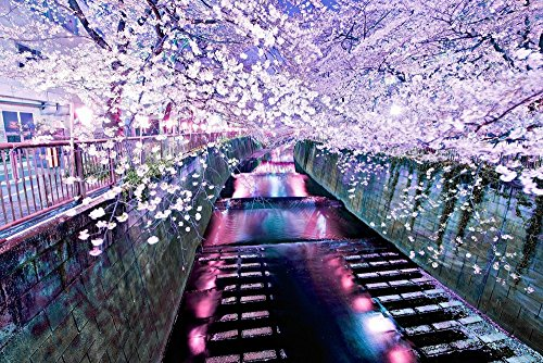 Cherry Blossom River - Art Print Poster Wall Decor Home Decor es