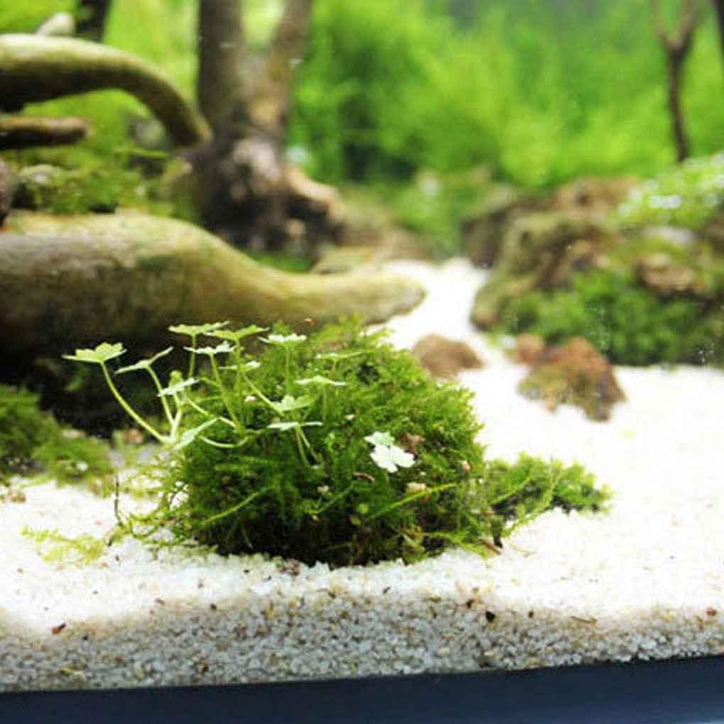GOTTING Mineral Natural acuática Bio Musgo Bola Decoración del Acuario de Cristal Casa del Árbol del Acuario Decoración Accesorios Acuario Forma de Bola: ...