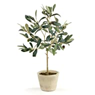 """Porch & Petal Olive Tree with Fruit in Pot 19.5"""", 2 Piece"""
