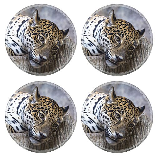 MSD Round Coasters Non-Slip Natural Rubber Desk Coasters design 20747599 Large Hybrid Close Up - Hybrid Round Table