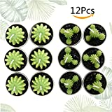 INHDBOX Lovely Cactus Tealight Candles,Party Decoration Tiny Candle Set -Green Plant Home Decorative,12pcs (Cactus 1)