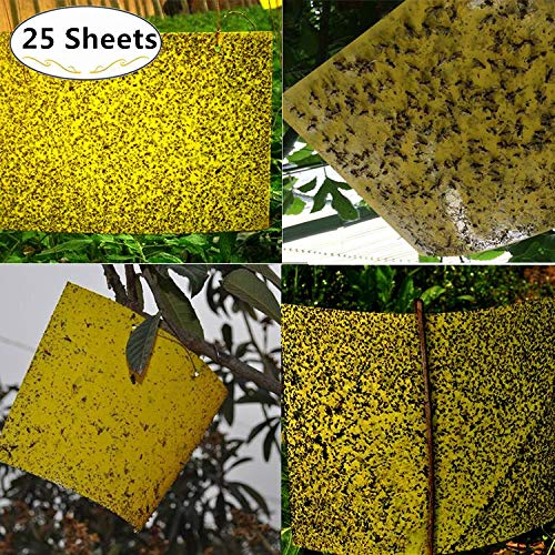 25 Sheet Dual-Sided Yellow Insect Sticky Traps, Magnoloran Adhesive Traps Bugs Sticky Board Fruit Fly Trap Sheets for Plant, Garden from Fungus Gnats, Whitefly, Aphid, Leaf Miner, Flying Insects, Bugs - (6x8 Inches, Twist Ties Included)