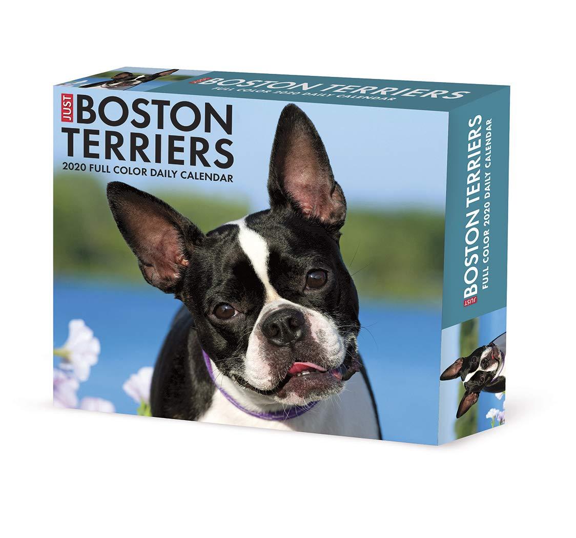 Boston Terrier 2021 Dog Breed Calendar 15/% OFF MULTI ORDERS!
