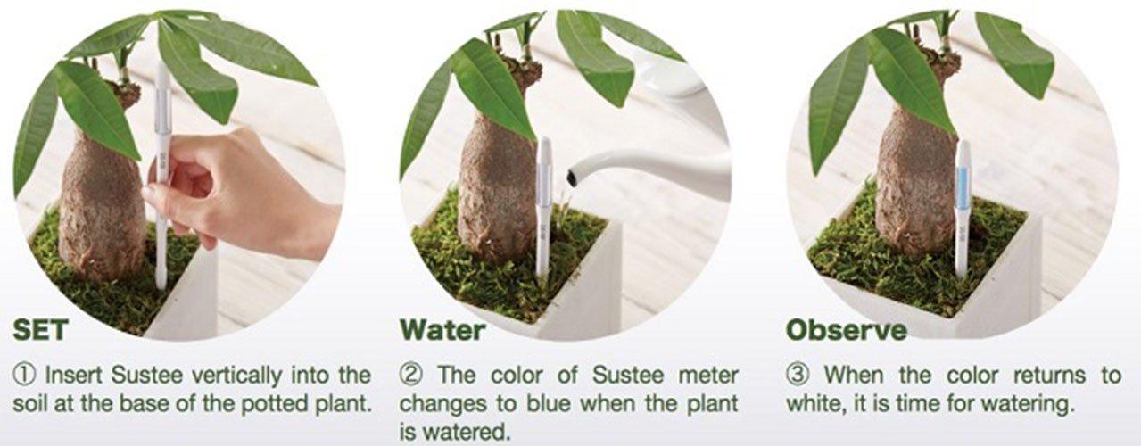 Green, Medium IPPINKA Sustee Aquameter Cabinotier Plaint Moisture Sensor Set of 2