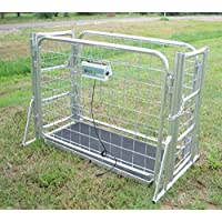 VS-660 hog Sheep Goat Scale with cage