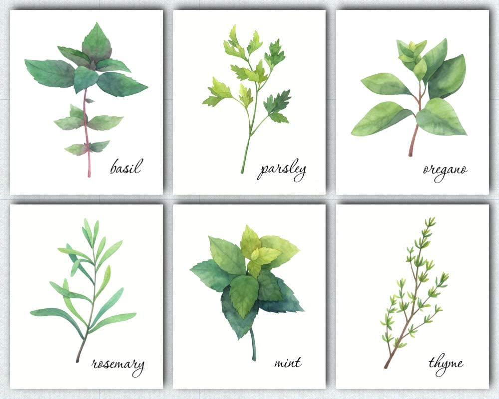 L & O Goods Kitchen Herbs Wall Art | Farmhouse Rustic or Modern Home & Kitchen Decor | Herb Theme Set of Six Poster Decorations | Artwork Pictures for Dining Room and Kitchen | 8 x 10