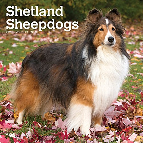 Shetland Sheepdogs 2019 12 x 12 Inch Monthly Square Wall Calendar, Animals Dog Breeds (Multilingual Edition)