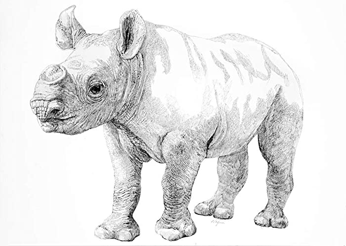 RHINO PRINT from original drawing, fine art limited edition