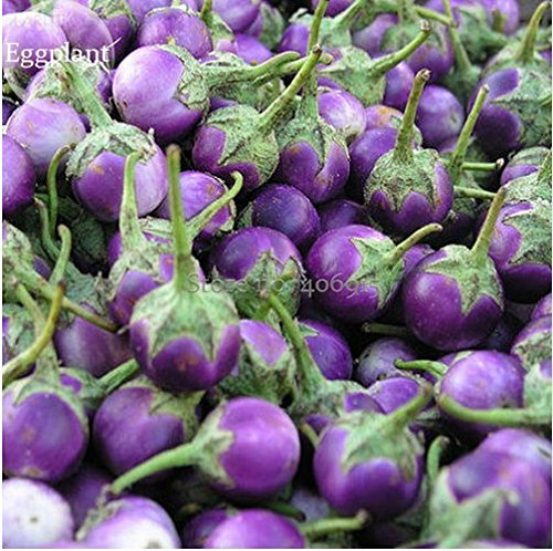 New Thai Purple Mini Round Eggplant, 100+ Seeds