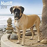 Mastiff Calendar - Dog Breed Calendars - 2017 - 2018 wall Calendars - 16 Month by Avonside