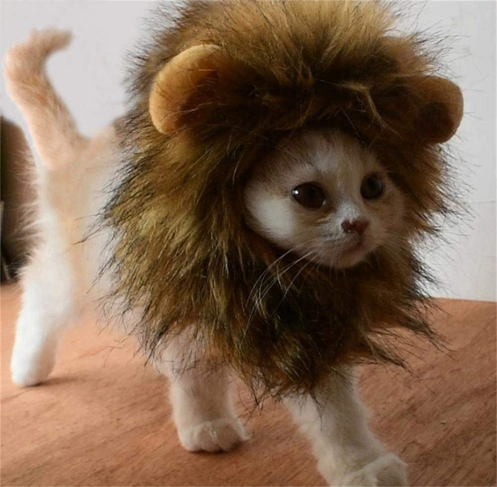 A cat wearing a lion costume