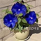 Rooms Ornamental-plant Mini Bonsai Hibiscus Seeds, Rare Potted Flower Seeds, Perennial Flowers Garden Greenhouse Plant 100 Pcs 8
