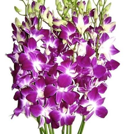 Amazon.com : Fresh Cut Flowers -Dendrobium Orchids Bom Sonia ...