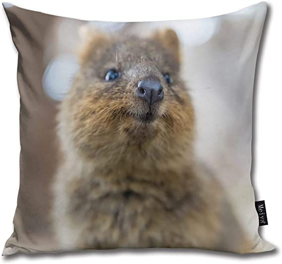 QMS CONTRACTING LIMITED Throw Pillow Cover Quokka Smiling