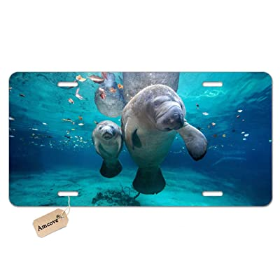 Amcove Florida Manatee Mother and Baby Aluminum Metal License Plate Car Tag Novelty Home Decoration for Women Girls Men Boys,6 X 12 Inch: Automotive