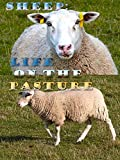 Sheep: Life on the Pasture