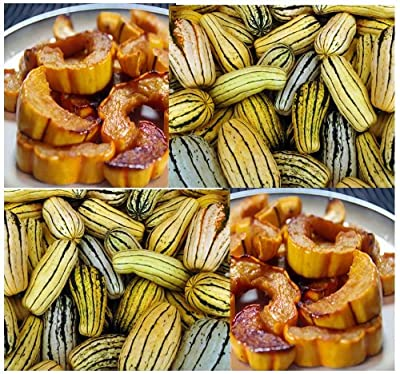 """DELICATA - SWEET POTATO Squash - seed (Winter) ~ 7-9"""" fruits Sweet tasting - VERY PRODUCTIVE AND STORES WELL - 100 DAYS (0010 Seeds - 10 Seeds - Pkt. Size)"""