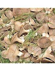 Semi Micelio Per Funghi Cardoncello 50g