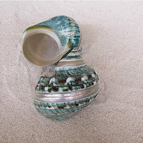 Hermit Cangrejo Conchas Mar Conchas De Caracol 2