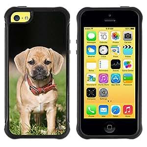 LASTONE PHONE CASE / Suave Silicona Caso Carcasa de Caucho Funda para Apple Iphone 5C / Beagle Pug Puggle Puppy Dog Breed