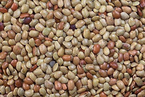 Indian Bean Tree - 6