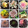 200pcs Succulent Cactus Seed Prickly Pear Bonsai Flower Seeds Potted Plant for Home Garden Can Beauty Anti-Aging Planting Pots