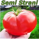 20 Semi POMODORO GIGANTE ITALIANO il più Grande Pomodoro del Mondo + Picolla Guida Coltivazione 2016