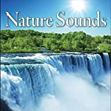 Mother Natures Sounds - Woodland Forest Ambience, Native Flute Lullaby, Chill Out New Age Music