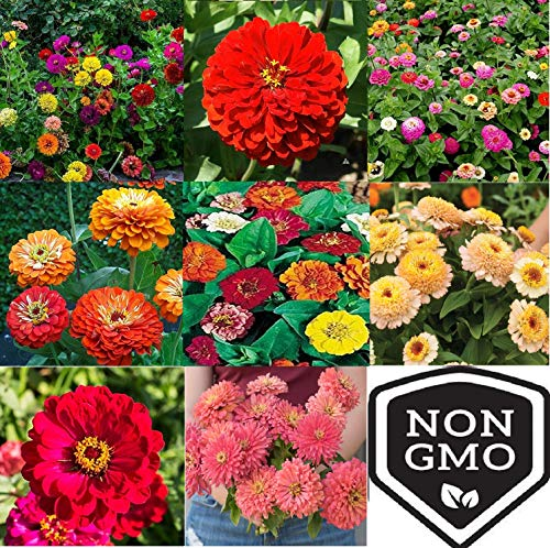 - David's Garden Seeds Collection Set Flower Zinnia Open Pollinated CY4931 (Multi) 9 Varieties 2500 Seeds (Non-GMO, Open Pollinated)