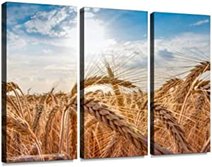 3 Panel Wall Art Modern Artworks for Home Decor Canvas Prints Wheat Field Ears of Golden Wheat Close up Beautiful Nature Sunset Pictures for Living Room Bedroom Decoration, Ready to Hang