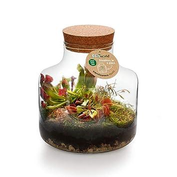 Basic Glass XL 3 Fleischfressende Ökosystem Ecoworld Swamp Biosphere
