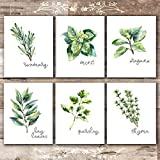Küche Herbs Art Prints - Botanical Prints - (Set of 6) - Unframed - 8x10s