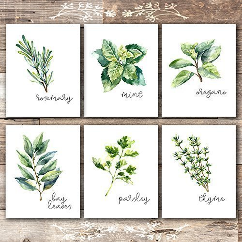 Poster Print Set - Kitchen Herbs Art Prints - Botanical Prints - (Set of 6) - Unframed - 8x10s