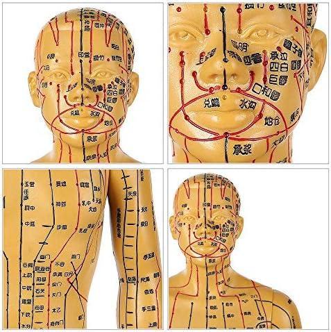 Acupunctuur Model - Mens Mannelijke en vrouwelijke Acupunctuur anatomisch model - met acupunctuurpunten Inclusief handen, voeten, oren, Hoogte 50cm / 19.6inch