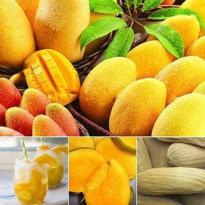 Wintefei 2 Pcs/Pack Mini Mango Tree Rare Seeds Fruits Plants Bonsai Home Garden Decor : Garden & Outdoor