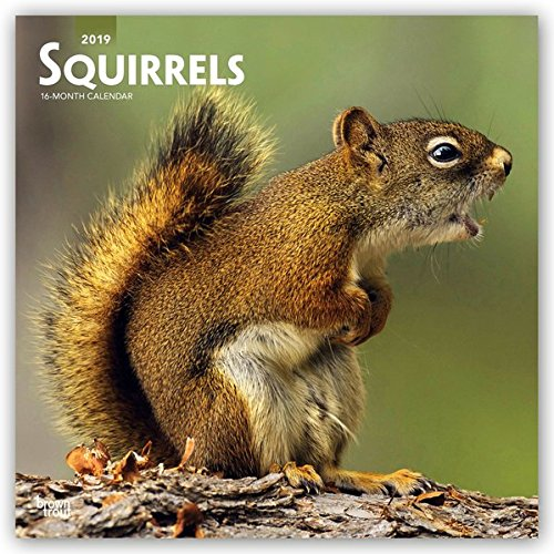 Squirrels 2019 12 x 12 Inch Monthly Square Wall Calendar, Wildlife Domestic Animals