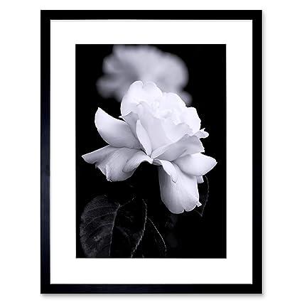 Amazon photo nature black white rose petal flower framed print photo nature black white rose petal flower framed print f12x4204 mightylinksfo