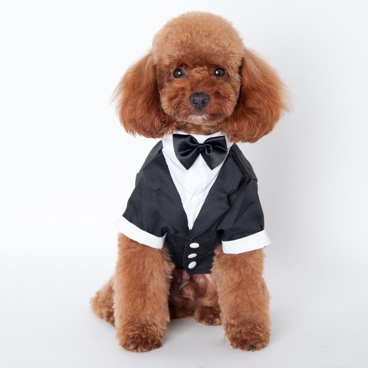 犬用タキシード