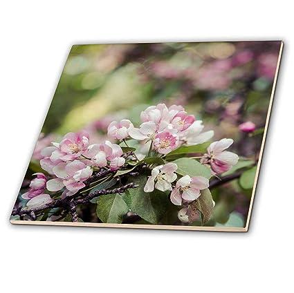 Amazon com: 3dRose Alexis Photography - Flowers Crab Apple