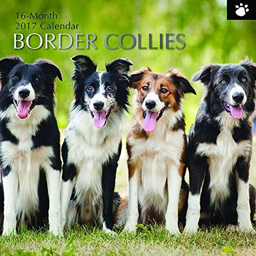 "Dog Breeds Border Collies 2017 Monthly Wall Calendar, 12"" x 12"""
