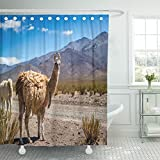 Emvency Shower Curtain 72''x72'' Polyester Fabric Blue Peru Llama In The Andes Brown Peruvian America Bolivia Desert Lama Alpaca Waterproof Adjustable Hook