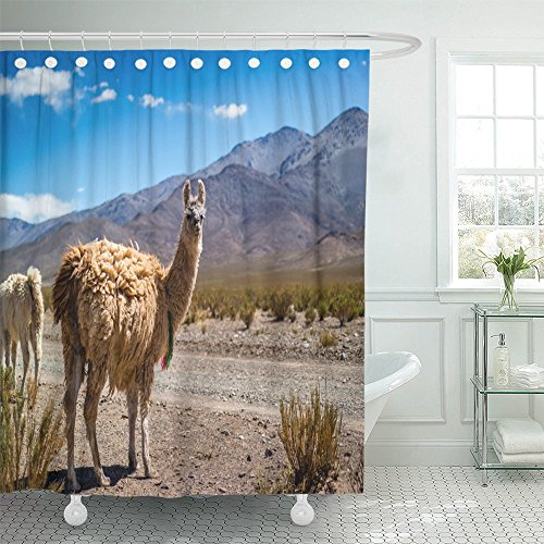 Emvency Shower Curtain 72''x72'' Polyester Fabric Blue Peru Llama In The Andes Brown Peruvian America Bolivia Desert Lama Alpaca Waterproof Adjustable Hook by Emvency