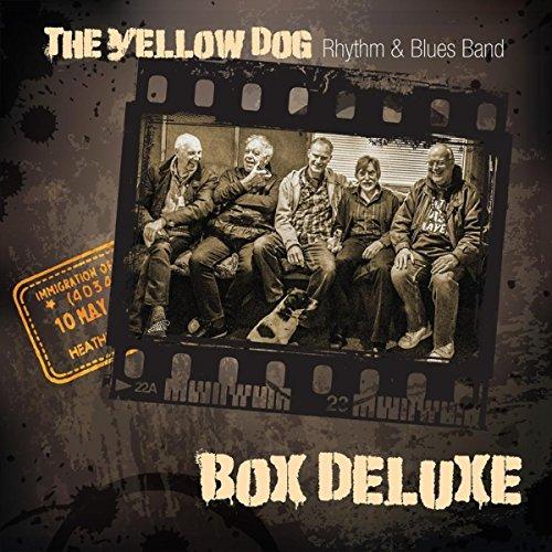 Yellow Box Womens Band - 7